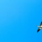 Pelican Boss at Lac La Biche by LAaustin