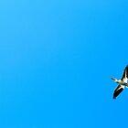 Pelican Boss at Lac La Biche by LAaustin