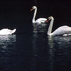 Three White Swans by Eve Parry
