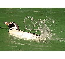 Look I can Swim !!! Photographic Print
