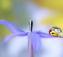 Flower dance by Lyn Evans