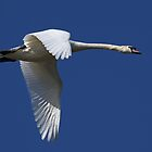 Graceful Flight by Mark Hughes