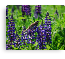 Sparrow Perched on the Lupine Canvas Print