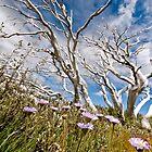 Beautiful Aussie Bush by Kat36