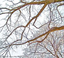 Winter Lace by rocamiadesign