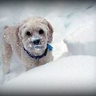Someone Who Enjoys The Snow! by Monica M. Scanlan