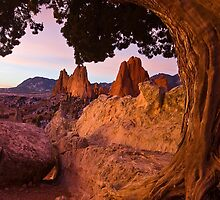 Rocks and Roots by RondaKimbrow