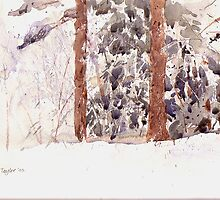 Scotspines in snow by Peter Lusby Taylor