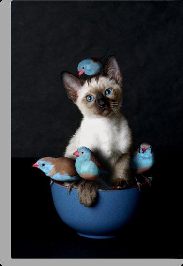 Bird Puss by billyboy