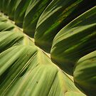 leaf close-up I by Ryan Bird