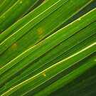 leaf close-up II by Ryan Bird