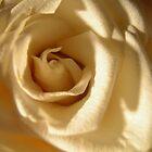 White Rose by Silvianna DiSalvo