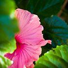 Bashful Bloom by Rhoufi