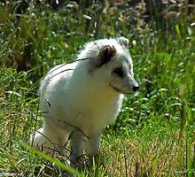 Arctic Fox by Maria A. Barnowl