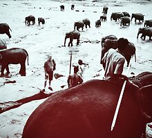 Elephant by bnzn