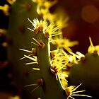 Sunshine cactus 2 by TeAnne
