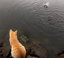 ginger cat - Grand Bassin sacred lake, Mauritius by Mark Whitehouse
