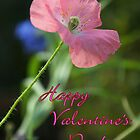 Poppy Notecard-  Happy Valentine's Day! by Diana Graves Photography