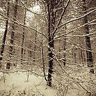 Snowy Woodland by StefanFierros