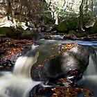 Padley Gorge  by Elaine123