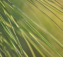 Pine needles by scw1217
