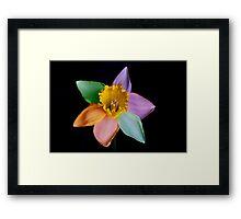 Colourful daffodil Framed Print