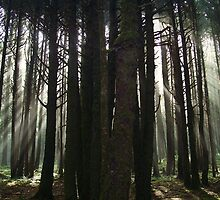 Neptune Beach....Forest Side...Yachats, Ore. by trueblvr
