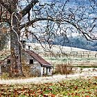 Old Stone Cabin by bettywiley
