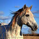 Horse by venny