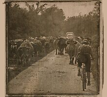 Cattle crossing head on by PhotoMairo