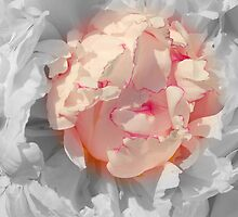 White And Pink Lace by Kathleen Struckle