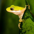 """Hang Sixteen"" - an american green tree frog by John Hartung"