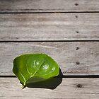 Leaf no.1 by judewatson