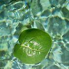 Leaf no. 3 by judewatson