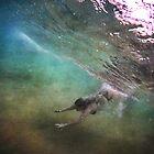 Hidden View ~ Mermaid Series 2 by Annette Blattman