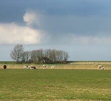 Polder landscape with sheep in Friesland in Holland by hollandimages