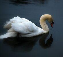 Swan on a Foggy Pond by madman4