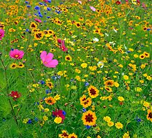 Wild Flower Meadow by James  Key