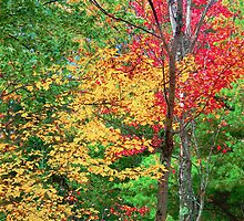 Fall Leaves Abstract in the Berkshires by Peter Sucy