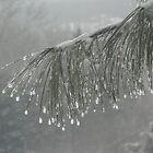 Pearls of Ice on Pines by John Carpenter