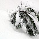 Winter Greenery by BarbL