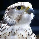 Falcon by Hovis