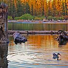 Duck Ripples by Leon Heyns
