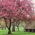 Pink in the Park by lorilee