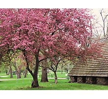 Pink in the Park Photographic Print
