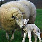 Hi Mum. by Petehamilton