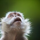 Monkey by damienlee