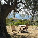 Peace under an olive tree by 29Breizh33