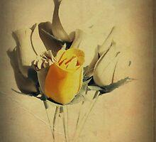 Honey by George Swann