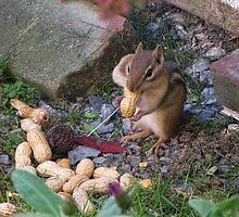Chipy Returns For More Peanuts by ✿✿ Bonita ✿✿ ђєℓℓσ